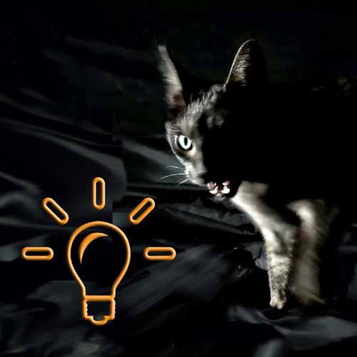 consultation avec chat