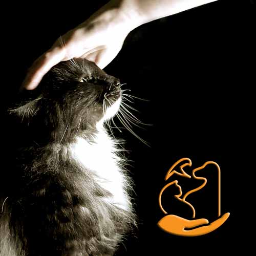 gardienange chat