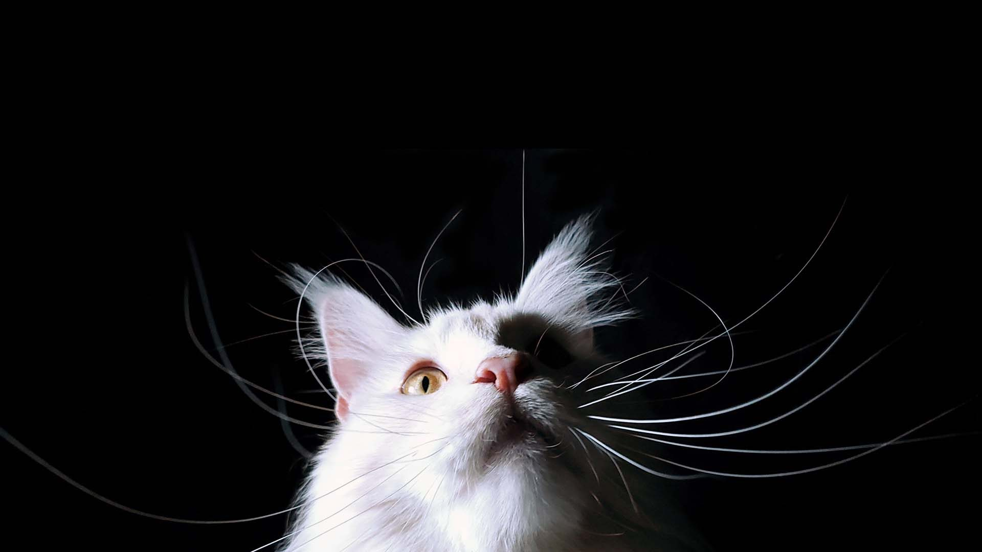 Éduchateur - les spécialistes du comportement du chat